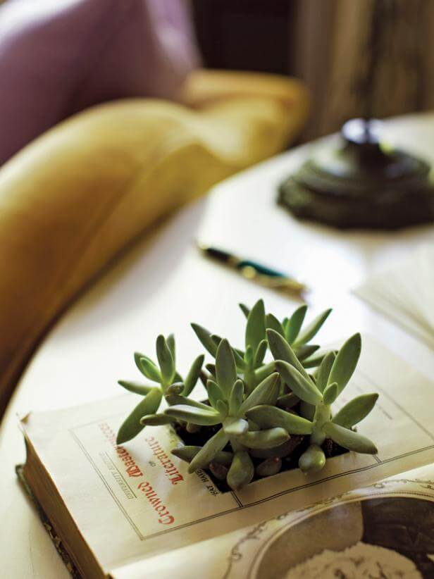 This succulent planter made from a book is the perfect project for the bookworm in your life.