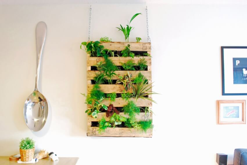living wall wooden pallet plants