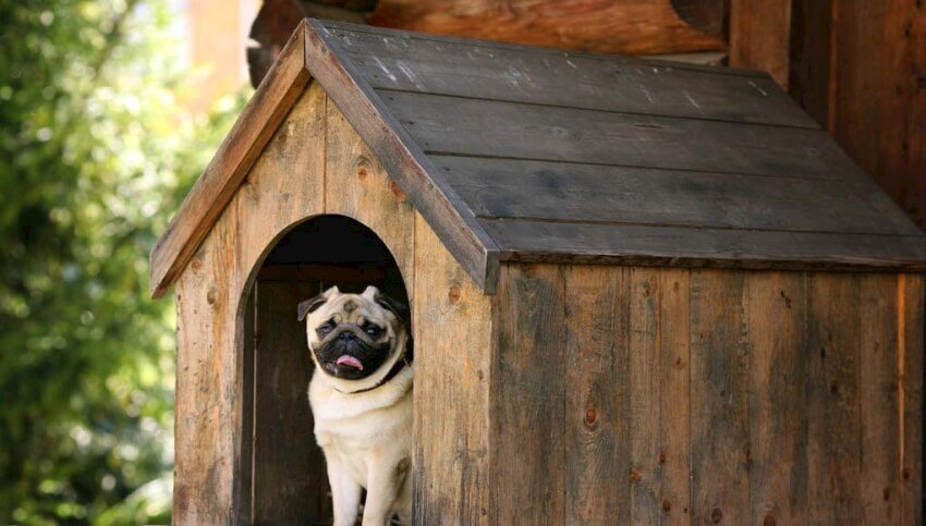 Pitched roof doghouse.